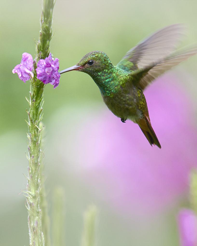 CHI SIAMO Cantiere creattivo fondatore colibrì